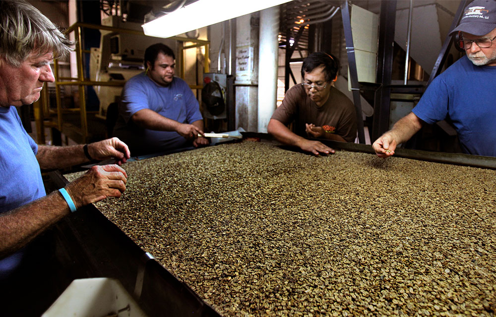 Kauai coffee quality control