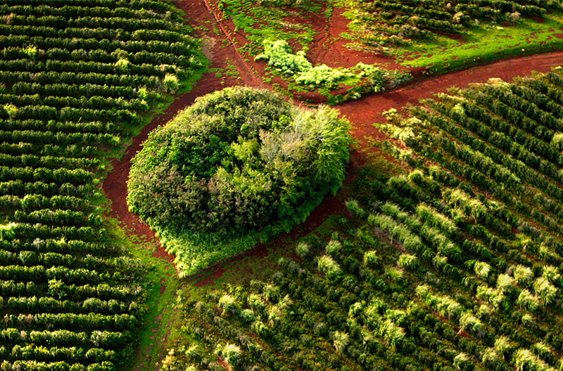 Kauai coffee farm aerial view