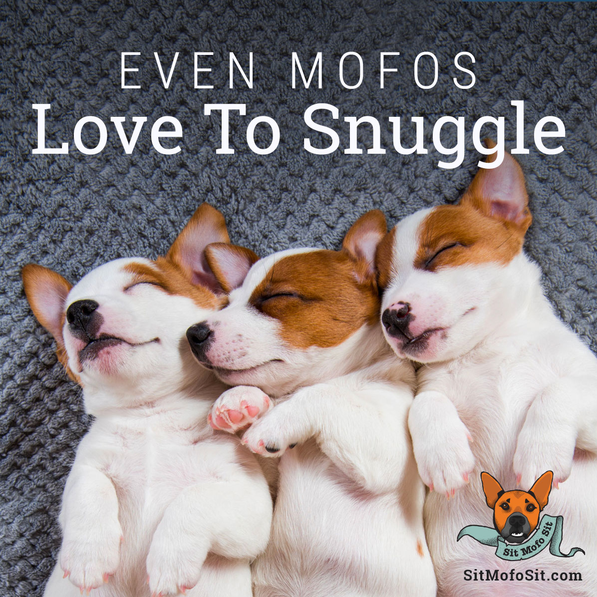 Sit Mofo Sit even mofos love to snuggle